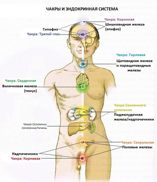 женские половые органы фото точка жи